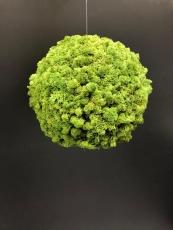 kleine Mooskugel grün
