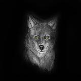 Wolf 50x50cm Kunstdruck