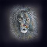 Löwe 50x50cm Kunstdruck