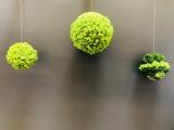 Mooskugel grün zweifarbig