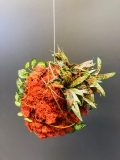 kleine Mooskugel orange mit Blumen